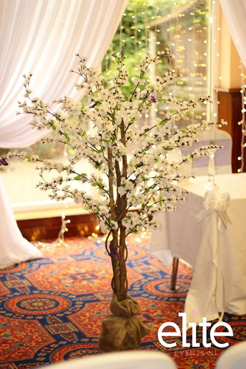 Our little Blossom trees are still a favourite. Simply beaut...